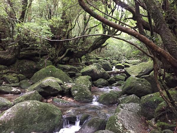Yakushima016_1.jpg