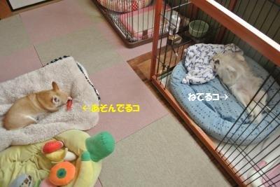 DSC_0187_convert_20180802101511.jpg