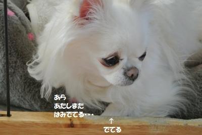 DSC_8958_convert_20180413130317.jpg