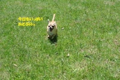 DSC_9283_convert_20180507151024.jpg