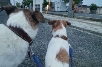 小梅小豆散歩