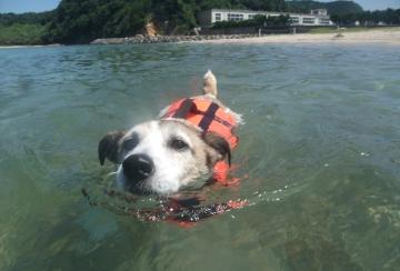 小梅水泳訓練2