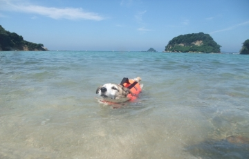 小梅水泳訓練