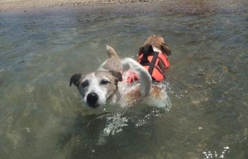 小梅あずき水泳訓練