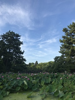 茶々・鶴舞公園2018.7