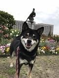 茶々・鶴舞公園2018.5月