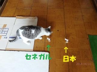blog1806022_1.jpg
