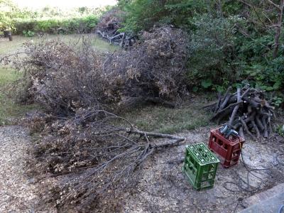 180403-63=シイタケ原木栽培用榾木造り a前庭