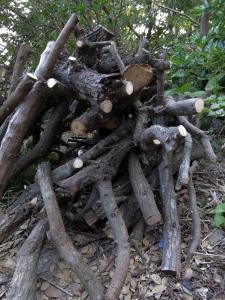 180403-64=椎茸栽培用榾木 a前庭
