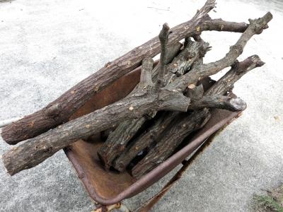 180513-4=椎茸駒菌200発分榾木 a庵玄関前