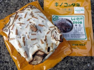 180513-51=椎茸駒菌 a庵前庭