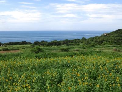 180731-22=ヒマワリ畑と太平洋 aONA耕地整理記念碑下