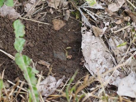 ナミモンクモバチ産卵場所