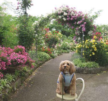 IMG_0934バラ公園
