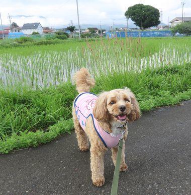 IMG_1159近所散歩
