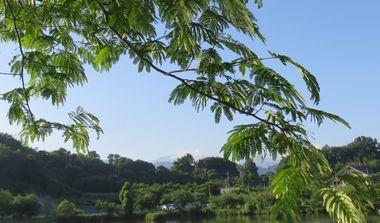 IMG_1396浜津ケ池