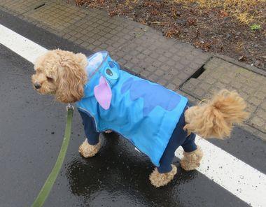 IMG_1796雨散歩