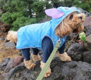 IMG_1801雨散歩