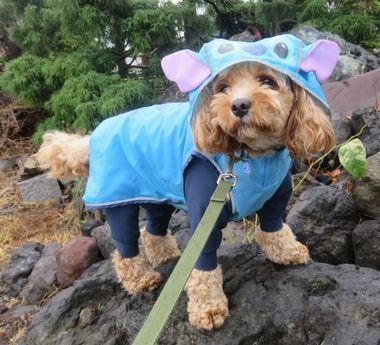 IMG_1802雨散歩