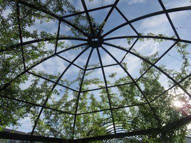 IMG_1826バラ公園