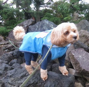 IMG_2096雨散歩