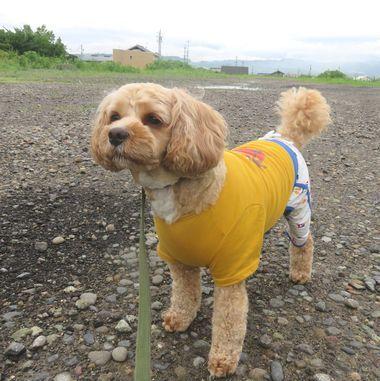 IMG_2190朝散歩