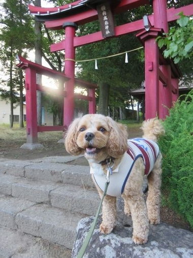 IMG_2272朝散歩