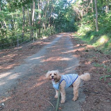 IMG_2434山道散歩
