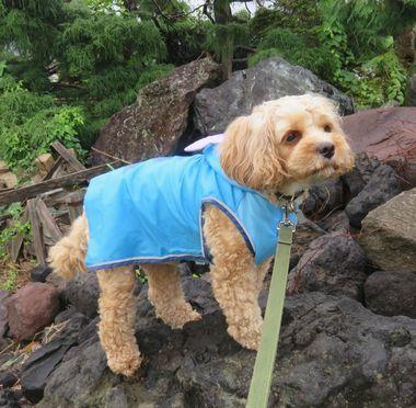 IMG_2947小雨散歩