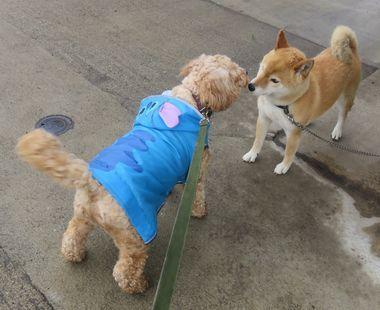 IMG_2955小雨散歩