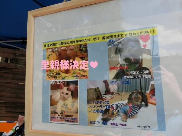 5月20日北神戸バザー 015