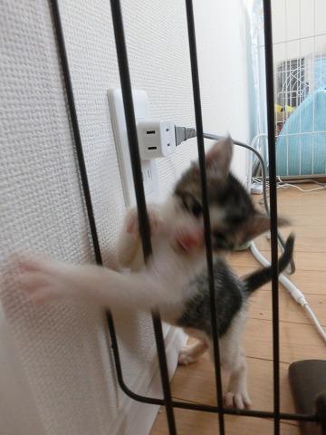 洋介&チャピと離乳食子猫 010