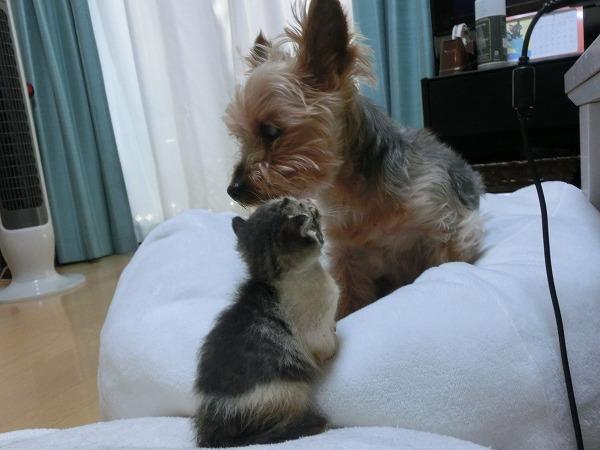 子猫と洋ちゃん 004