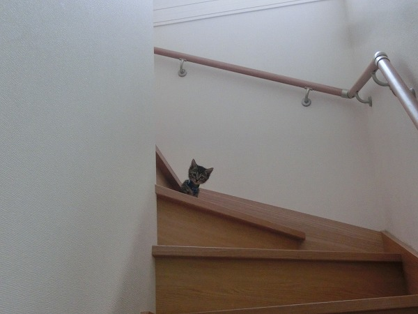 子猫ハンターチロル 009