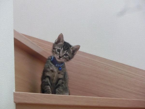 子猫ハンターチロル 010
