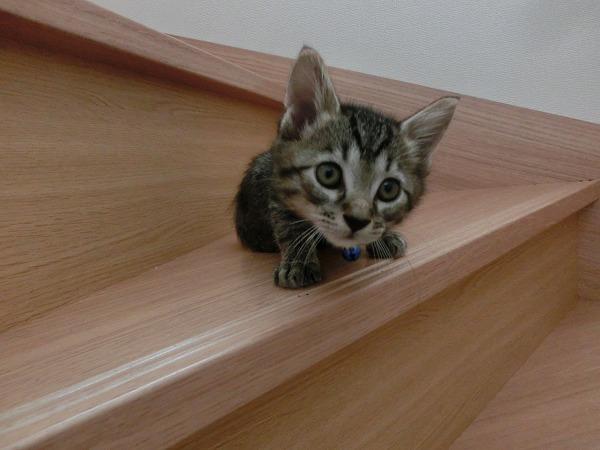 子猫ハンターチロル 005