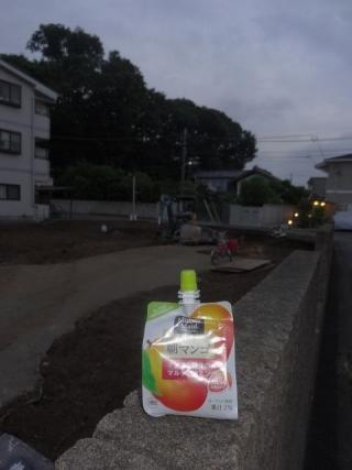 朝マンゴ (1)
