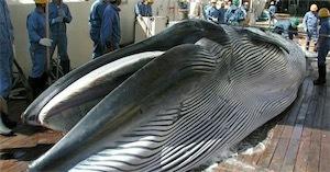 クジラjU2gIBZk