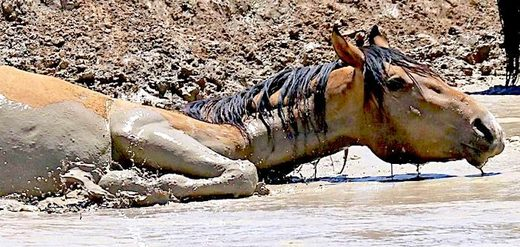 アリゾナ北東部、干ばつで数十頭の馬が死亡1wild_horse_wateringholeRick_B