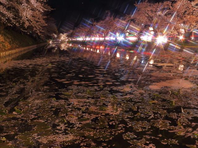 弘前夜桜1