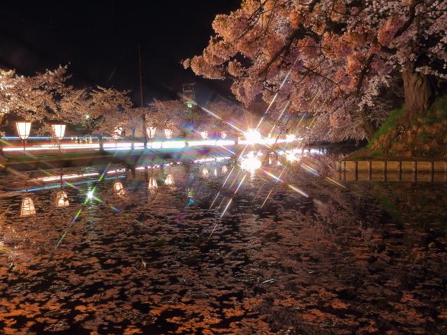 弘前夜桜2