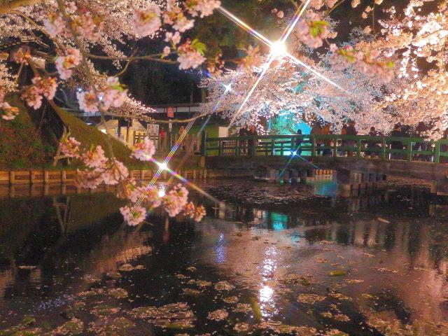 弘前夜桜6