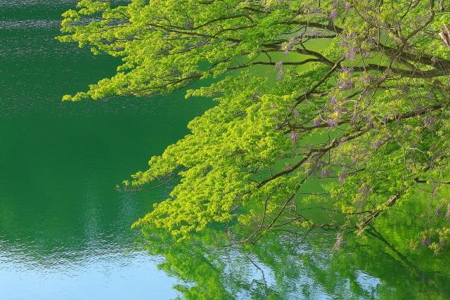 十二湖10