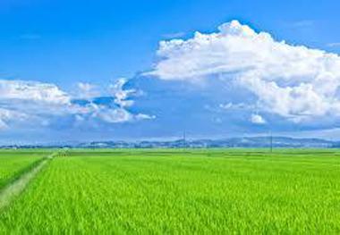 梅雨明け 観測史上最も早い 猛暑 豊川 御津 花屋 花夢