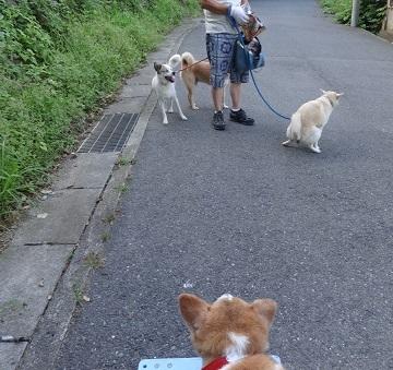 2DSC02955散歩
