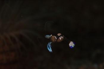 タオ島、水中写真