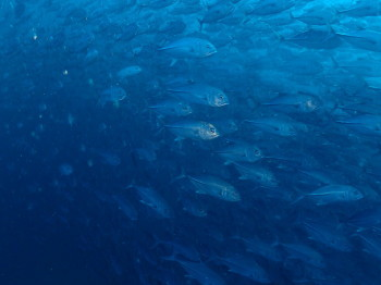 セイルロック、タオ島、ダイビング