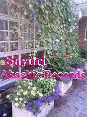 アカシックレコード リーダーさゆり 花壇の花から