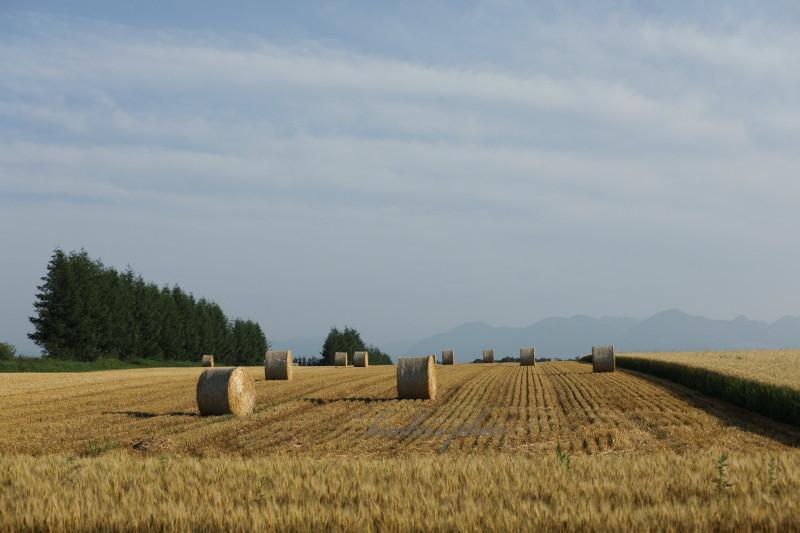 小麦ロール  32670001署名入りedited
