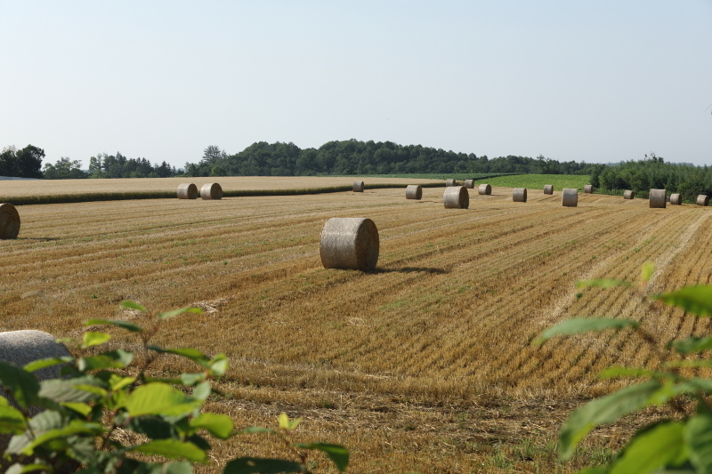 小麦ロール  33730001